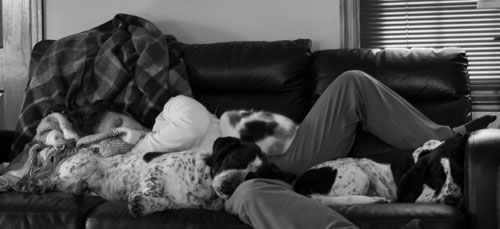 Wife sleeping with two dogs and a cat