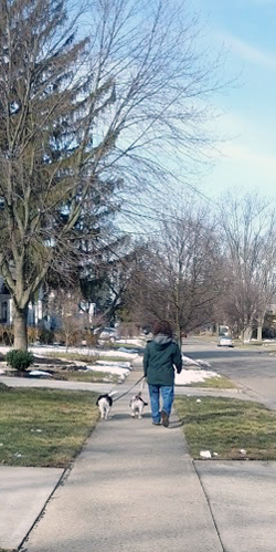Wife walking both of our dogs