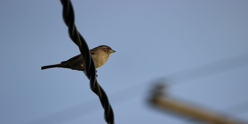 Bird hanging out on a wire