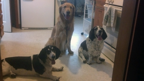Daisy, Sadie, and Finnegan after there first date.