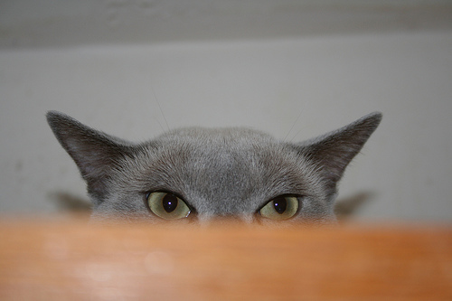 A cat is hiding behind a desk, with the eyes just showing over the top
