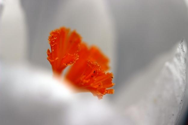 flower_marco